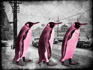 Penguins Crossing