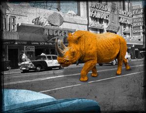 Rhino In Reno