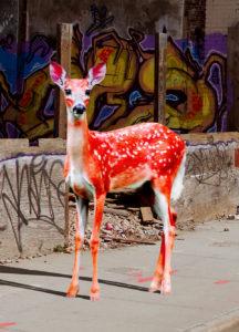 Bambi – Orange