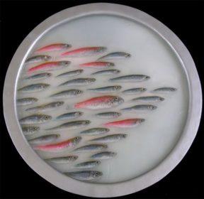 Sardines – 8