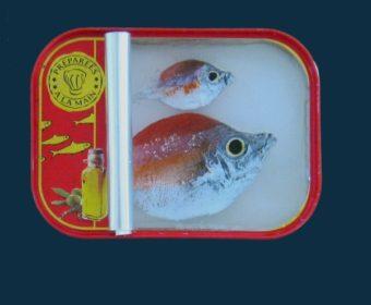 Sardines – 5
