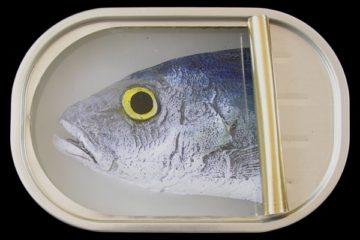 Sardines – 9