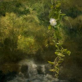 Landscape 61