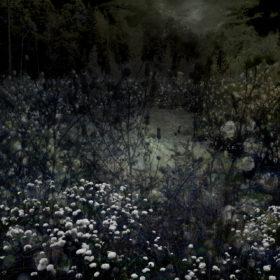 Landscape Flowers 05