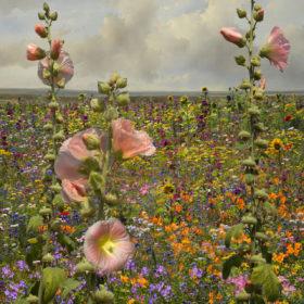 Landscape Flowers 06