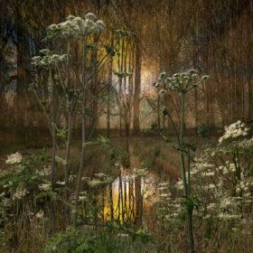 Landscape Flowers 07