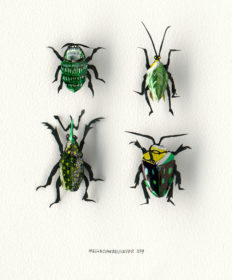 4 Insects