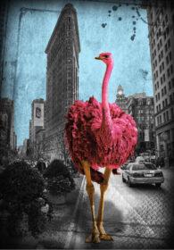Flatrich Ostrich